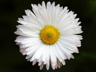White flower by Steinar Engeland