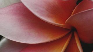 Jacaranda and miced colour plants