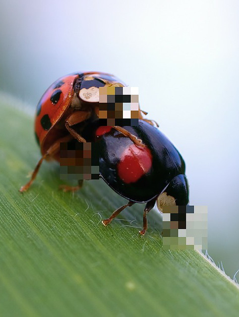 Anonymous ladybugs-pixelated for privacy (by Ralph Kunze - Pixabay)