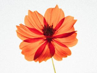 Orange flower silhiuette by Hotae Kim (Unsplash)