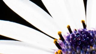 White flower with purple centre by Master Wen (via Unsplash)
